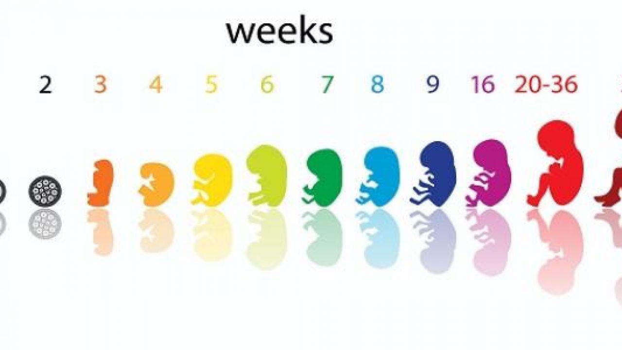 كيف يتم احتساب الحمل