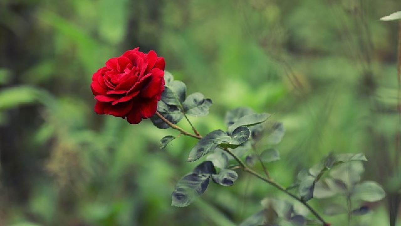 أجمل القصائد عن الحب