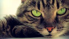 جميع أنواع القطط