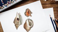 كيفية تعلم الرسم