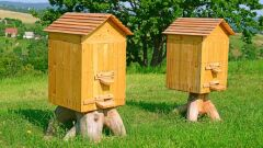 معلومات عن خلية النحل