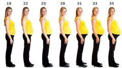 مراحل تطور الحمل