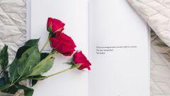 أجمل مقولات الحب