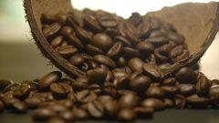 ما هي مضار القهوة