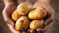 فوائد البطاطا