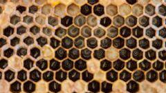 فوائد عسل النحل للحامل