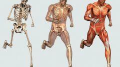 عدد العظام الموجودة في جسم الإنسان