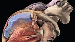 مقال علمي قصير عن القلب