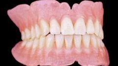 عدد أسنان الإنسان البالغ