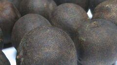 فوائد الليمون الأسود للرجيم