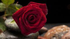 رسائل حب دينية للزوجة