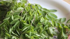ما فائدة أعشاب المورينجا